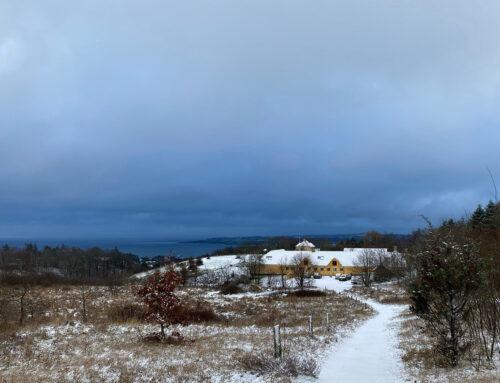 Vinter på karpenhøj